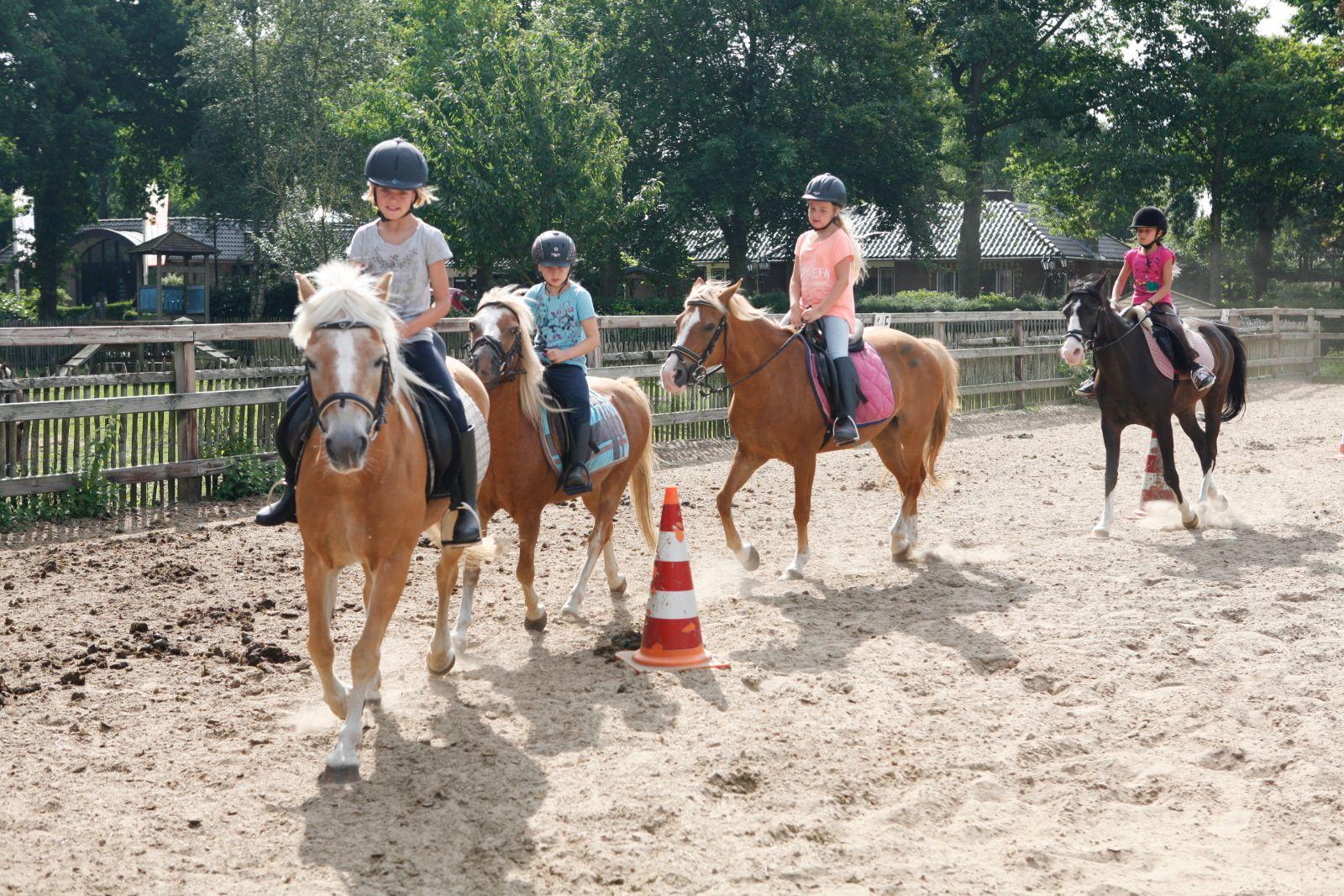 de boshoek paardrijden
