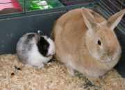 camping t westdorp konijnen